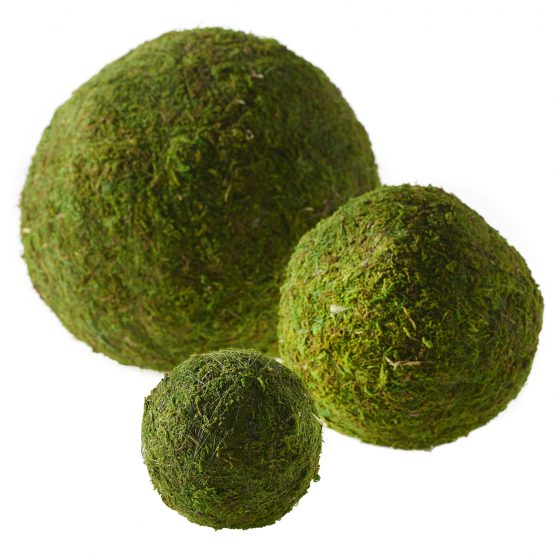 Moss Ball Collection