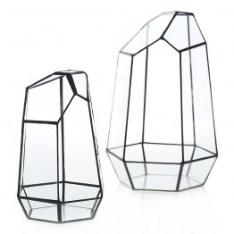 Black and glass angled terrarium