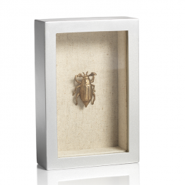 Gold Beetle In Silver Shadow Box