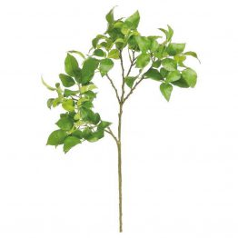 Wild Rose Green Foliage Spray