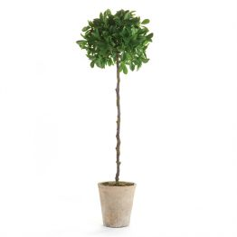 Faux Ficus Topiary Single