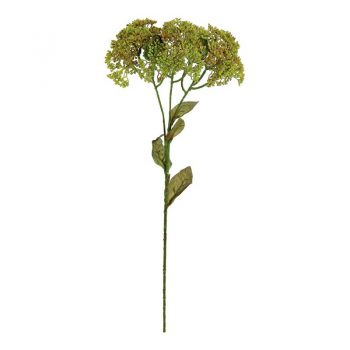 Green Yarrow Seed Cluster Spray