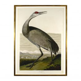 Hooping Crane Print Art