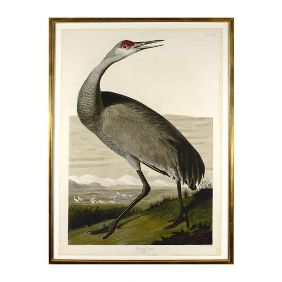 Hooping Crane Print Art