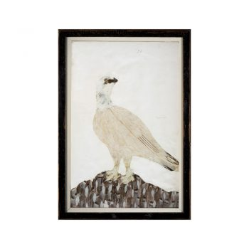 framed bird print art from the feather book of Dionisio Minaggio
